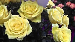 wedding flowers in bulk fresh cut fresh bulk roses from wedding
