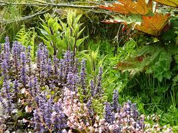 non native plants creating a wildlife haven u2013 thegreenerdream