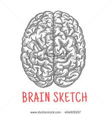 brain sketch stock images royalty free images u0026 vectors