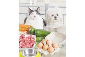 cuisiner pour chien recettes chien et 10 recettes maison pour régaler mon chien