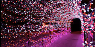 Botanical Gardens St Louis Hours Garden Glow November 23 To December 19 Hours Wednesday Sunday 5