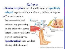 Knee Reflex Arc Chapter 13