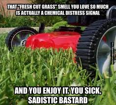 Grass Memes - funny memes fresh cut grass smell funnymeme com that one