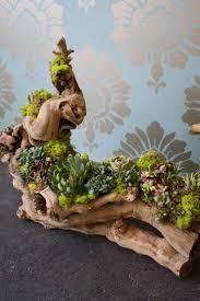328 best succulents images on pinterest plants succulents