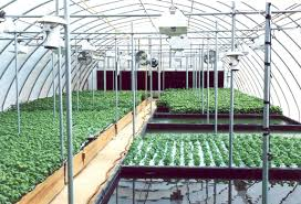 hydroponic gardening systems hydroponic systems roundup 33 best