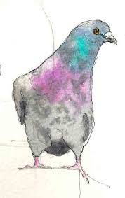 have dogs will travel bird sketches and edm 114