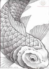 superb koi fish tattoo sketch photos pictures and sketches