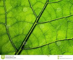 tree sheet stock image image 9618041