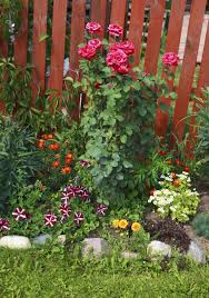 Marigolds Shade by Underplanting Rose Companions U2013 Suggestions For Plants That Grow