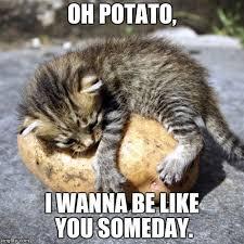 Cute Funny Cat Memes - 20 super duper cute and funny kitty memes sayingimages com