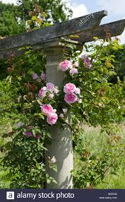 ilm walled garden fair rosamund stock photos u0026 fair rosamund stock images alamy