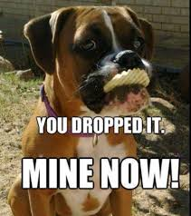 Funny Boxer Dog Memes - image may contain dog meme and text cooking eh pinterest