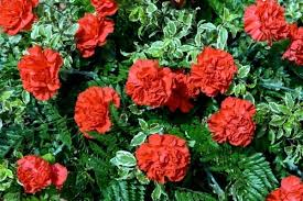 Fragrant Plants For Shade - 20 most fragrant herbs u0026 flowers for an aromatic garden