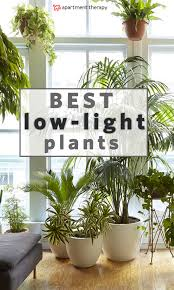 Fragrant Indoor Plants Low Light - 8 houseplants that can survive urban apartments low light and