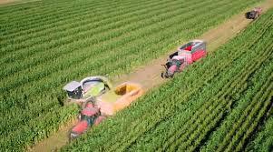 chambre agriculture 17 le sorgho donne du relief au maïs entraid