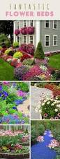 colorful shade plants for landscaping gardening pinterest