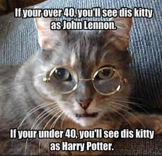 40 very funny cat meme pictures and images