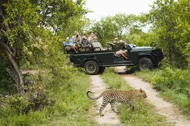 What Is The Definition Of Opulent What Is A Safari Defining African Safaris