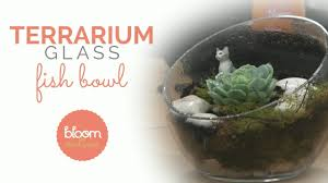 make a professional glass fish bowl terrarium youtube