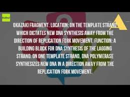 what is the role of okazaki fragments in dna replication youtube