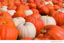 white pumpkins orange and white pumpkins stock photo i1921731 at