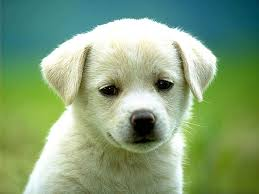 dog wallpapers dog wallpapers animals town