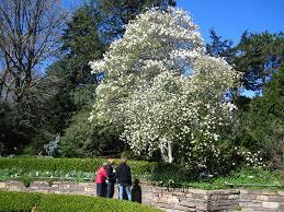 fragrance garden brooklyn botanic garden