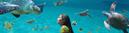 buy tickets and passes seaworld san diego
