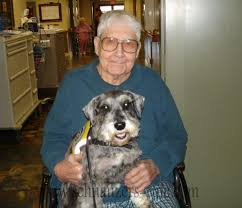 about therapy dogs and schnauzers