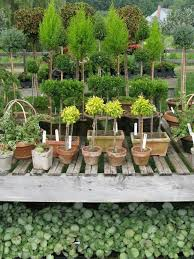 Topiaries Plants - 471 best the shape of topiary images on pinterest topiaries