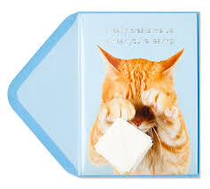 cat with tissue goodbye goodluck cards papyrus