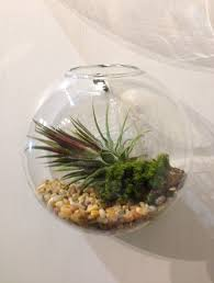 home decoration diy wall mounted plant terrarium for awesome