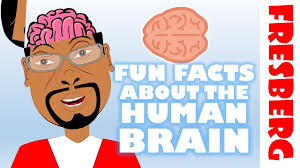 facts about the brain for interesting facts about the