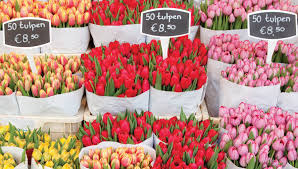 10 reasons why spring is the best time to visit amsterdam i