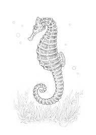 how to draw a seahorse with black and grey ink liners