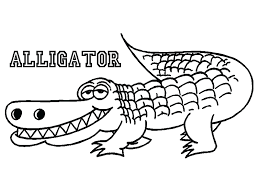 alligator coloring pages printable kids free alligators