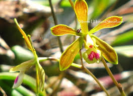 native florida air plants hoe and shovel butterfly orchids a father u0027s day gift for me