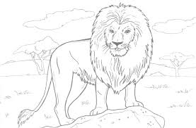 coloring animalso colour free printable lion coloring pages