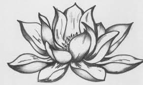 Flower Drawings Black And White - best 25 lotus flower drawings ideas on pinterest lotus tattoo