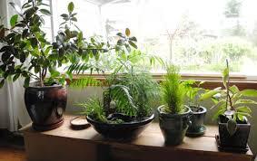 indoor planting caring for your indoor miniature gardens the mini garden guru