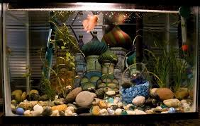 Betta Fish Tank Betta Fish Care A Betta Fish Must Read