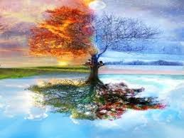 download 4 seasons tree 111211 nature u0026 landscape mobile wallpapers