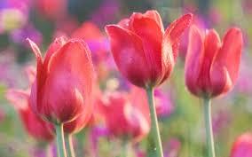 spring flower free background images