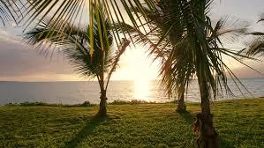 Trees Backyard Hammock And Palm Trees At Sunset Hammock Swinging On The Wind