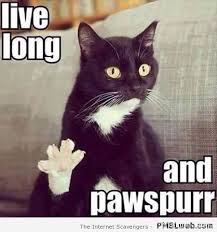Funny Saturday Memes - 12 live long and pawspurr meme pmslweb
