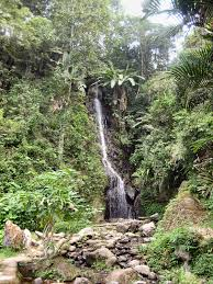 5 Dominant Plants In The Tropical Rainforest Flora Of Indonesia Wikipedia