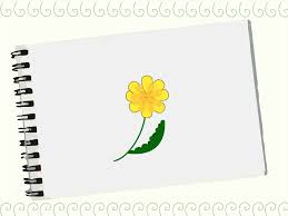 how to draw a dandelion 8 steps with pictures wikihow