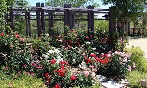 Botanical Gardens In Las Vegas Where To Catch Blooms In Vegas Las Vegas Blogs