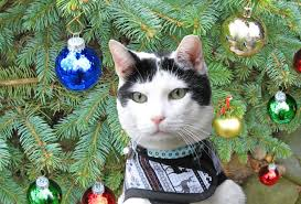 cute christmas cat video adorable cat christmas holiday music