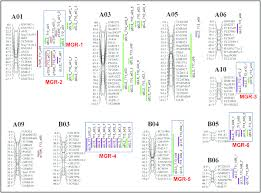 genetic map genetic map of the s population from the cross sunoleic 97r and